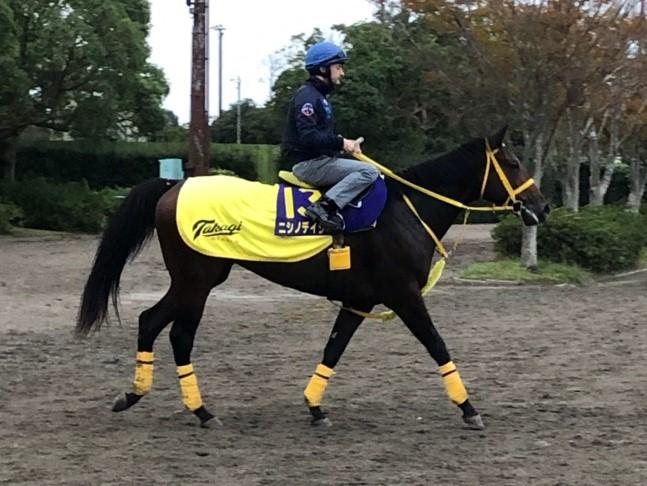 【菊花賞】ヒシゲッコウ 欧州を代表する名手がスミヨン騎乗