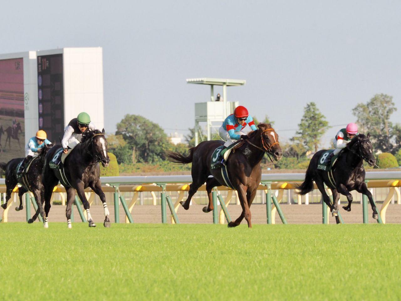 川島信二が騎乗停止 京都8Rにおける制裁