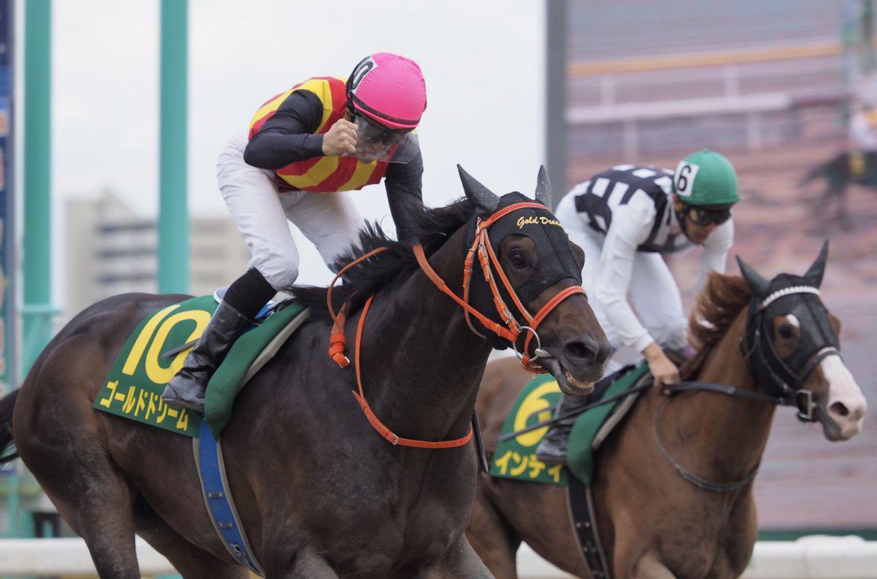【南部杯】JRA出走予定馬