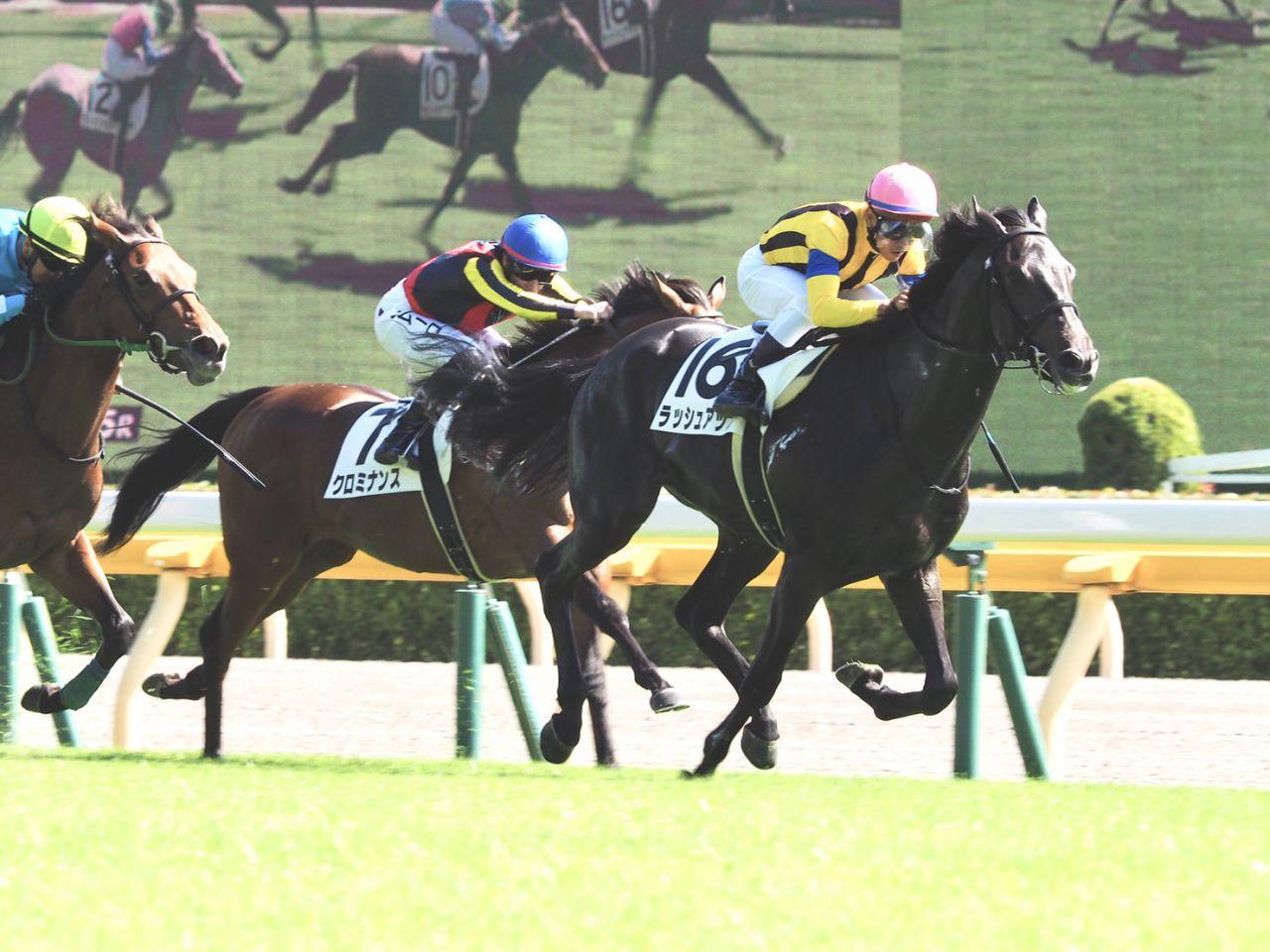 【新馬/東京5R】ラッシュアップがデビューV!圧倒的人気のクロミナンスは3着