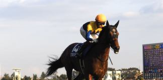 【ジャパンC】登録馬と見どころ ワグネリアンなど 外国馬は出走なし