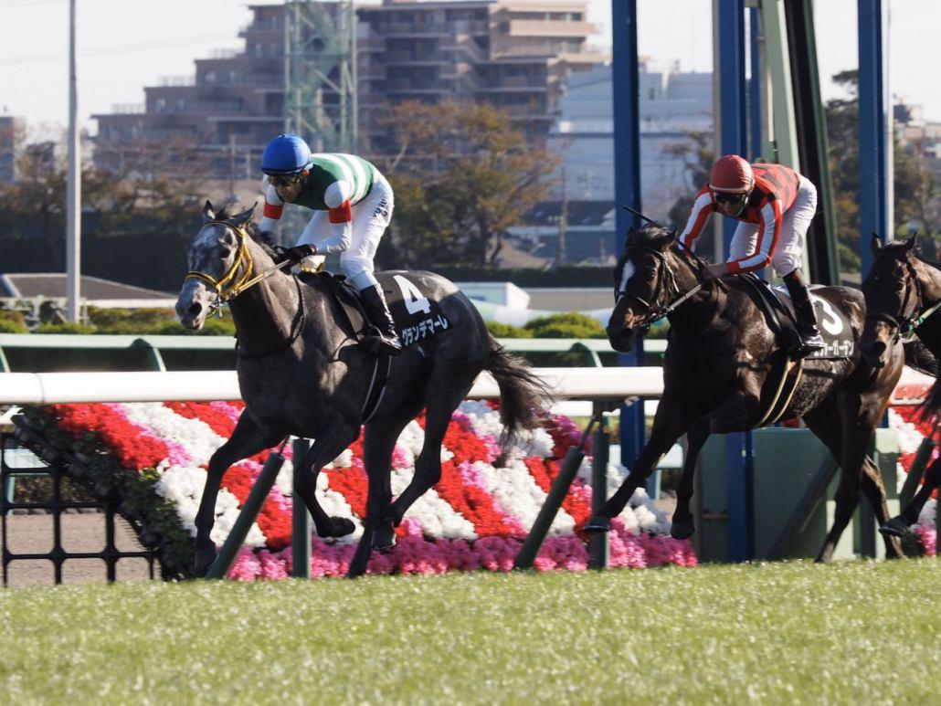 【葉牡丹賞】藤岡佑「理想的な競馬」グランデマーレがデビューから2連勝!