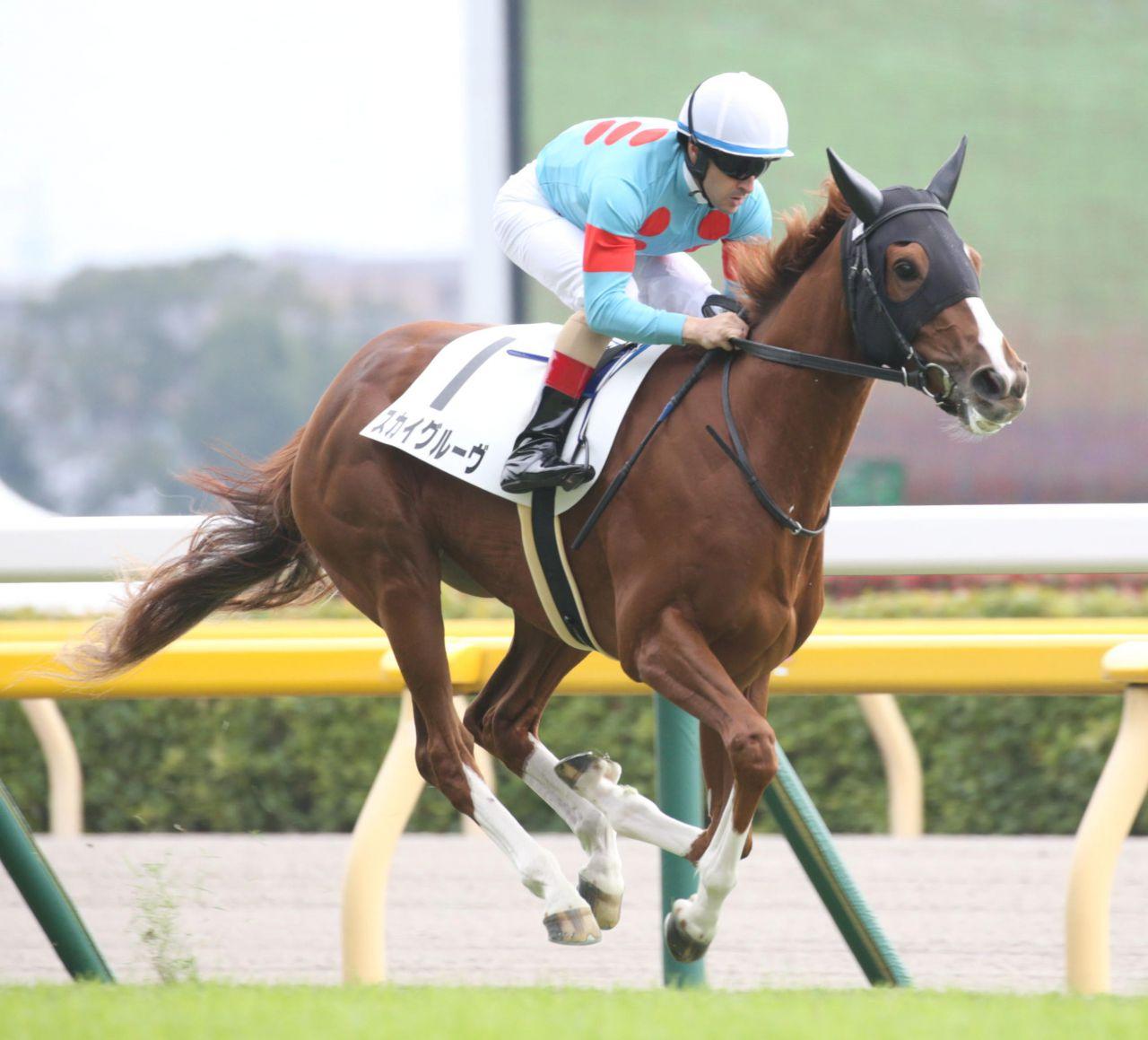 【新馬/京都5R】スミヨン騎乗のトゥルーヴィルがデビュー戦を快勝!