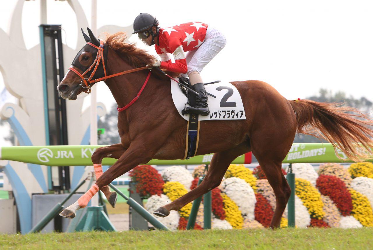 【新馬/東京5R】ルメール「走りそうです」ディープ産駒 バルトリがデビューV!