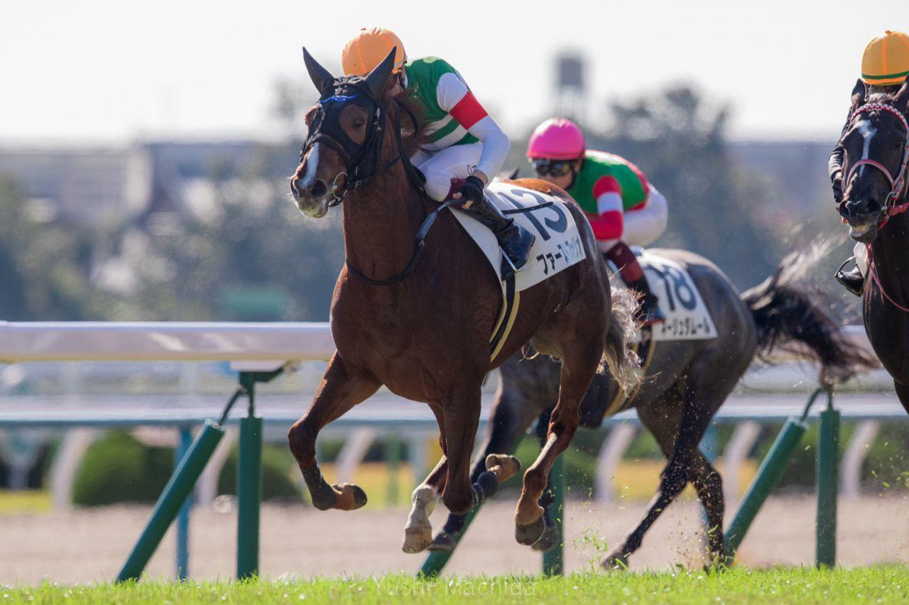 【新馬/京都5R】母シーザリオの良血馬 ファーストフォリオがデビュー勝ち!