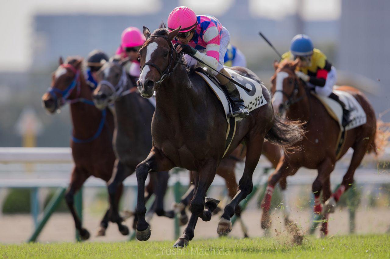 【新馬/京都6R】キンシャサノキセキ産駒 シャイニーズランがデビュー勝ち!