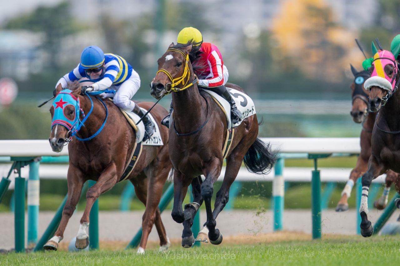 【新馬/阪神5R】アメリカンシードがデビューV!2番手から抜け出して快勝