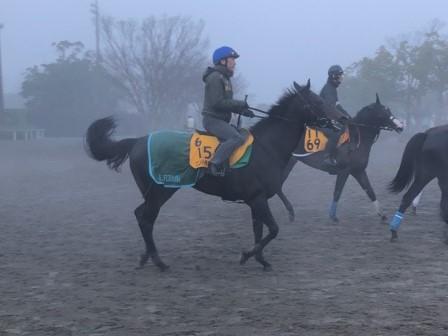 【朝日杯FS】出走馬の調教後の馬体重