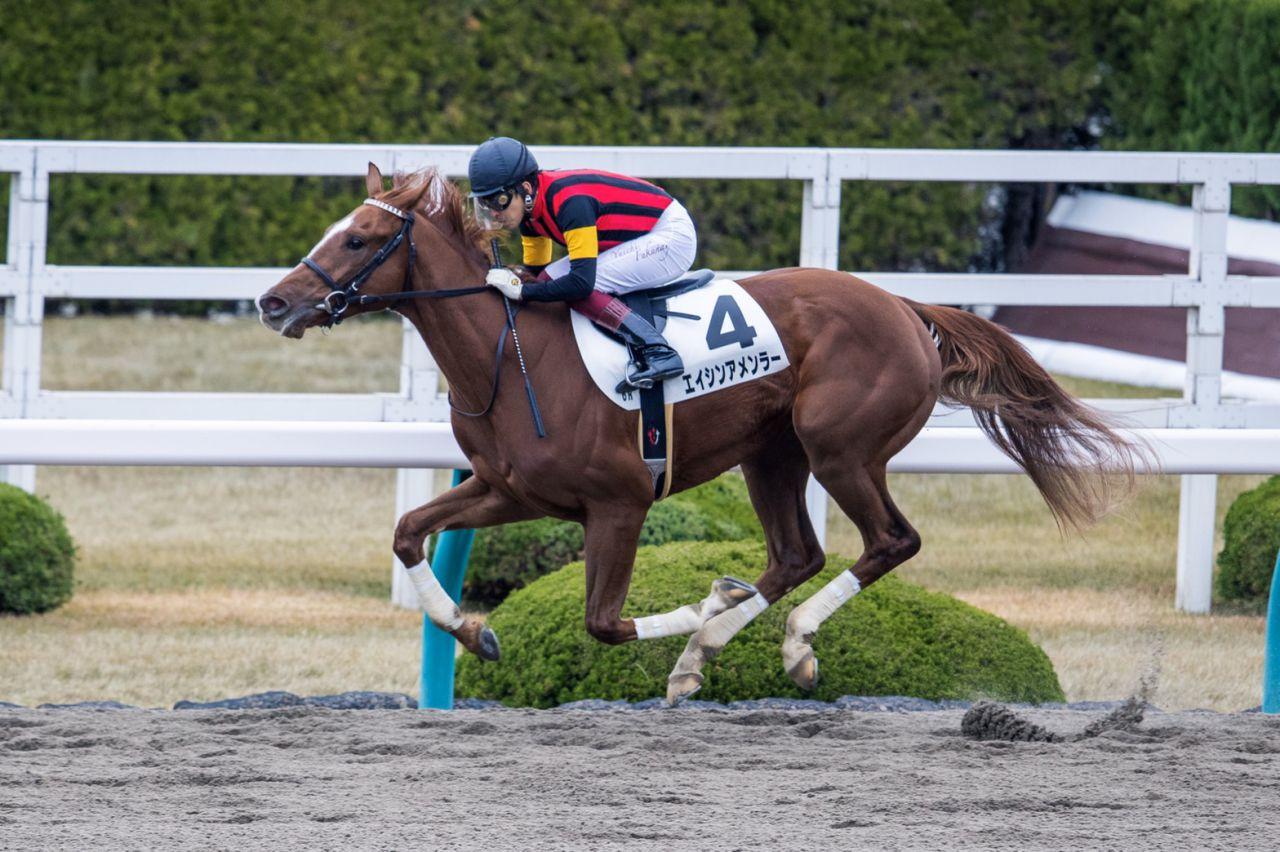 【新馬/阪神6R】7番人気のエイシンアメンラーが7馬身差圧勝!