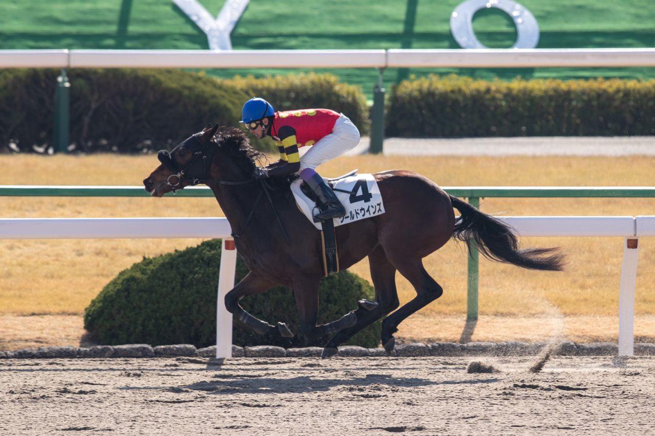 【新馬/中山6R】内田博騎乗のルフトシュトロームが人気に応える!ラストは流してゴール