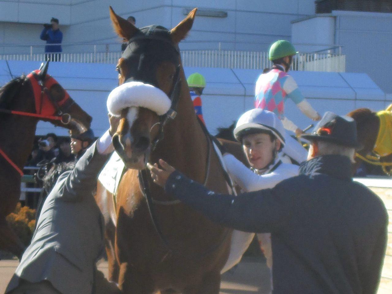 【新馬/中山4R】ミッキープリンスが人気に応える