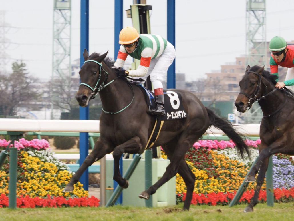 【若竹賞】ルメール「能力があります」シーズンズギフトがデビュー2連勝