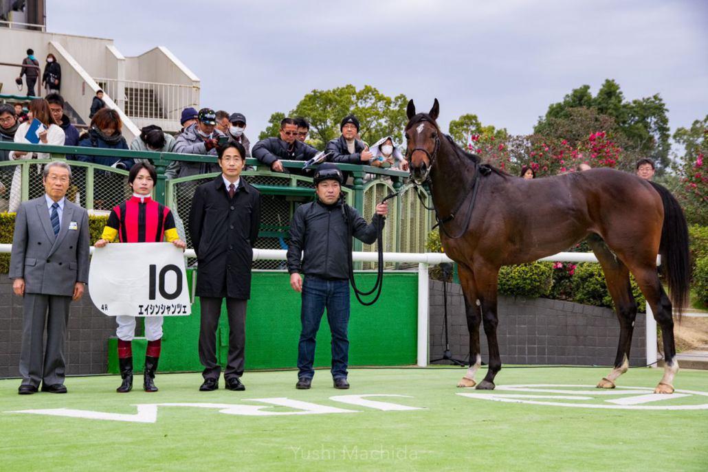 【新馬/京都4R】エイシンシャンツェがデビューV!半兄にエイシンバッケン