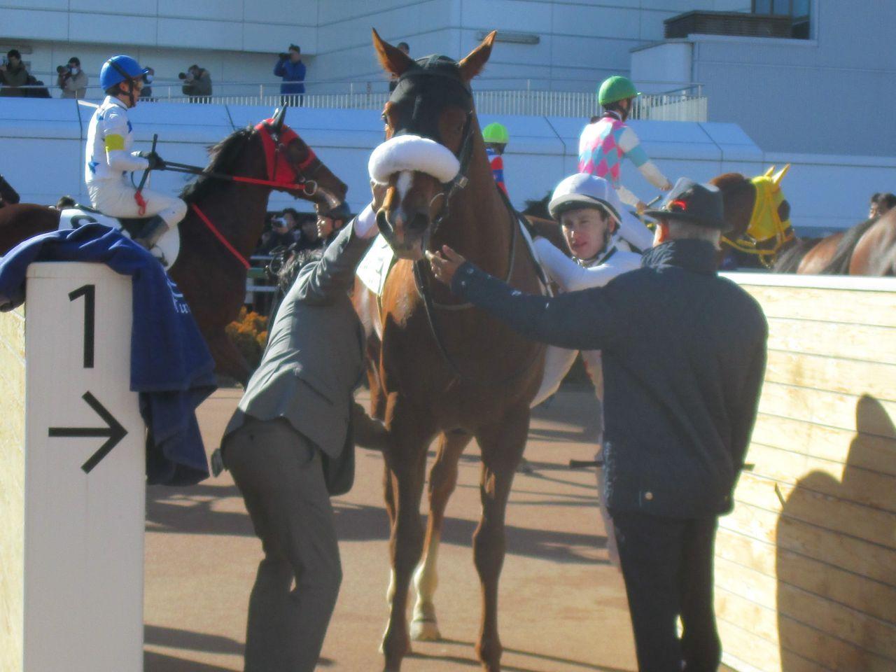 日曜中山4R新馬は国枝厩舎のミッキープリンスが1番人気にこたえる