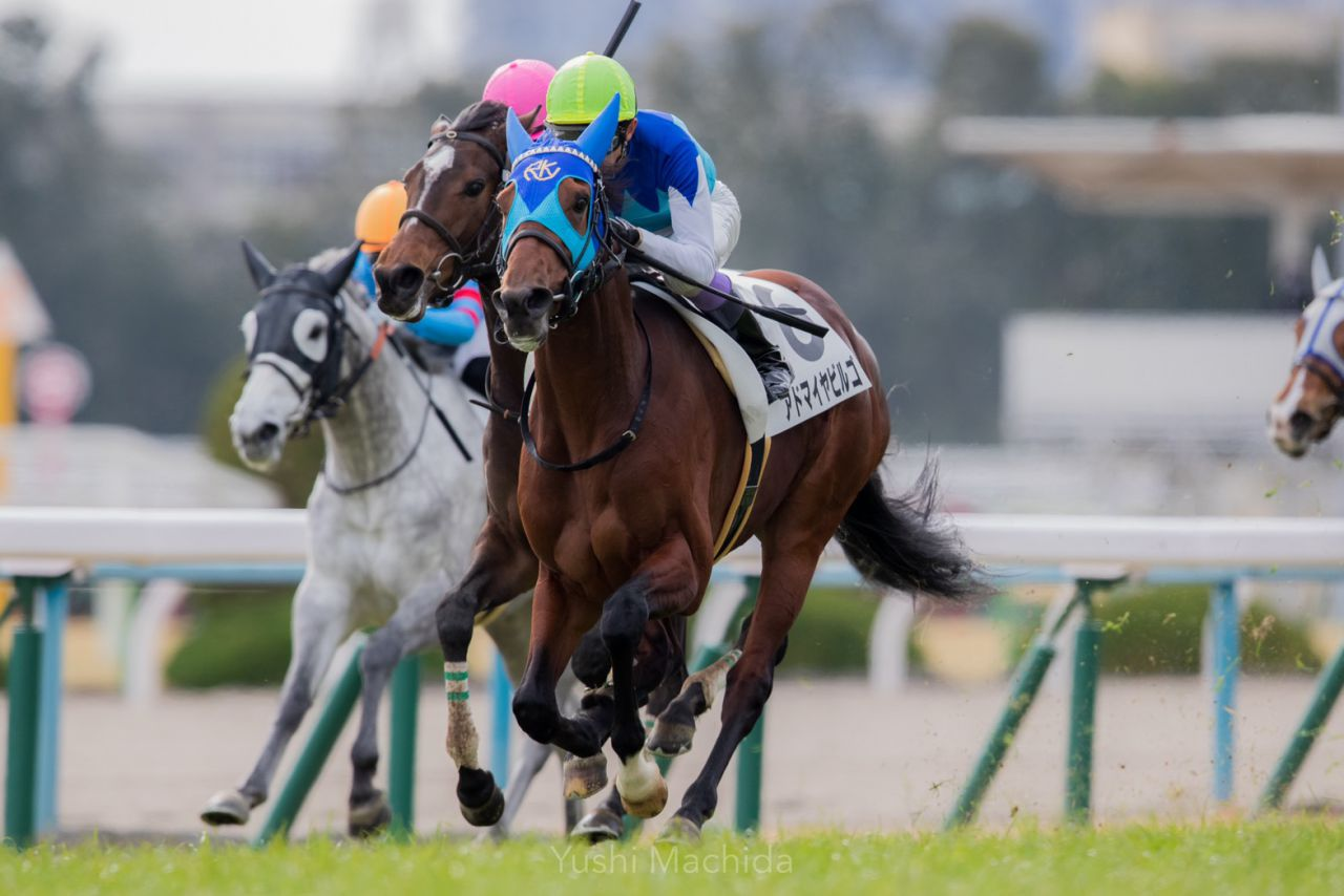 【京都8R】武豊スマートランウェイが逃げ切りで2勝目を飾る
