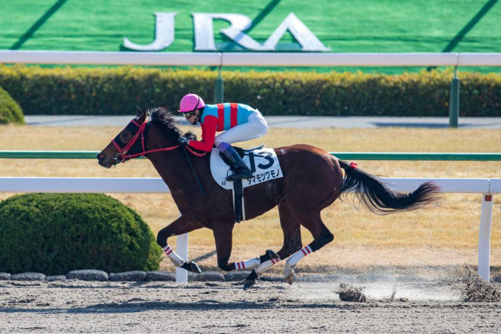 【京都4R】武豊「能力ある」タマモツワモノが2勝目