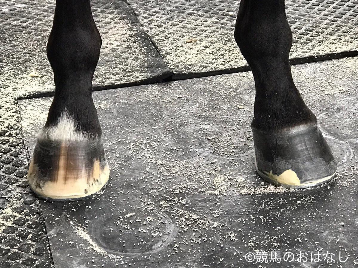 西内荘/装蹄の感触が良かった馬【1/5日曜版】