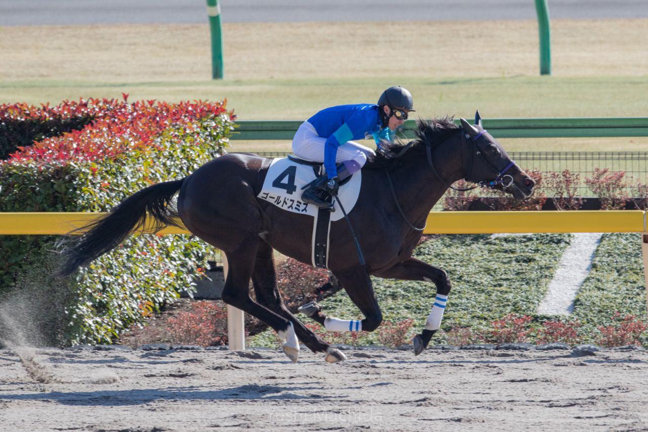 【シルクロードS】川田騎乗のアウィルアウェイが豪快に突き抜ける!