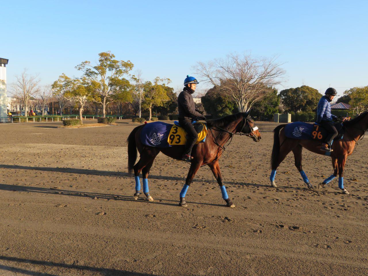 藤田菜七子騎手は落馬負傷のため16日は全て乗り替わり