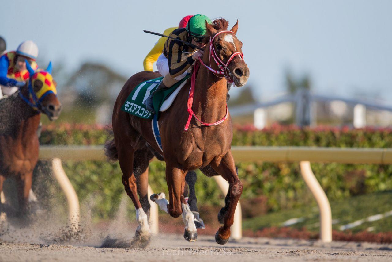 【高松宮記念】海外からの予備登録馬