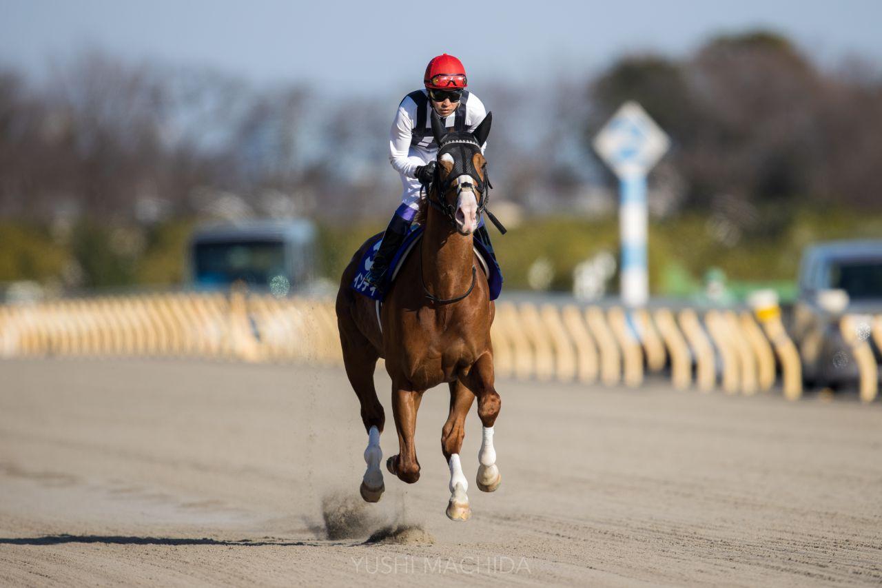 【フェブラリーS】武豊「走りのバランスが…」レース後ジョッキーコメント
