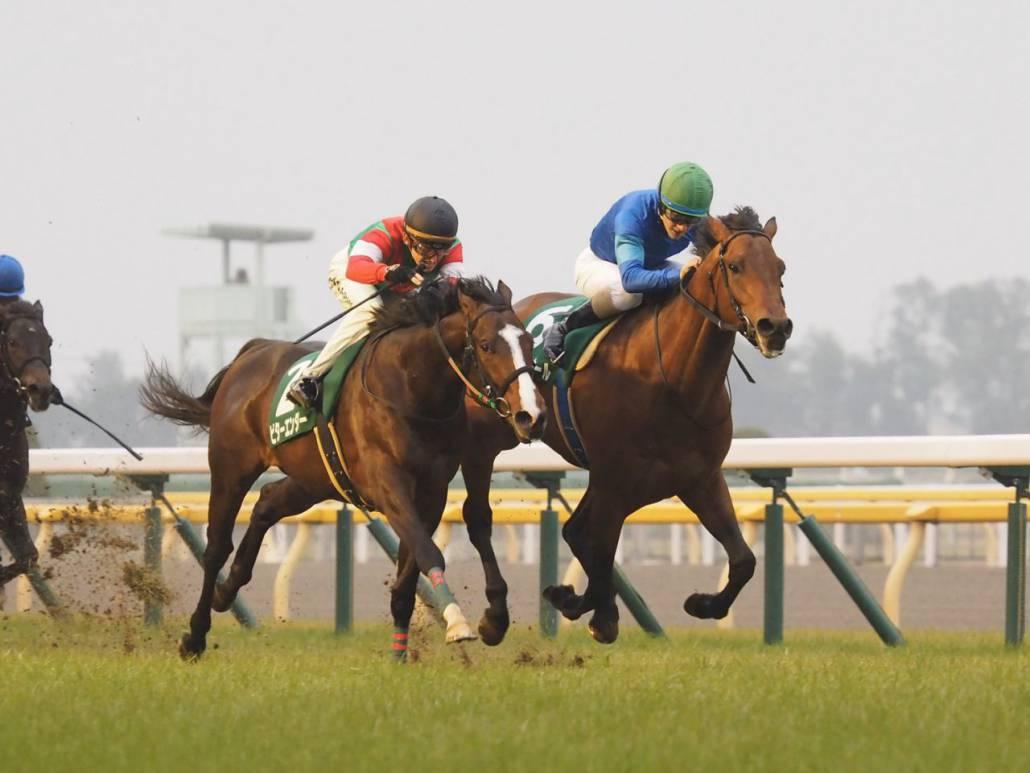 【共同通信杯】武豊「競馬は難しい」レース後ジョッキーコメント