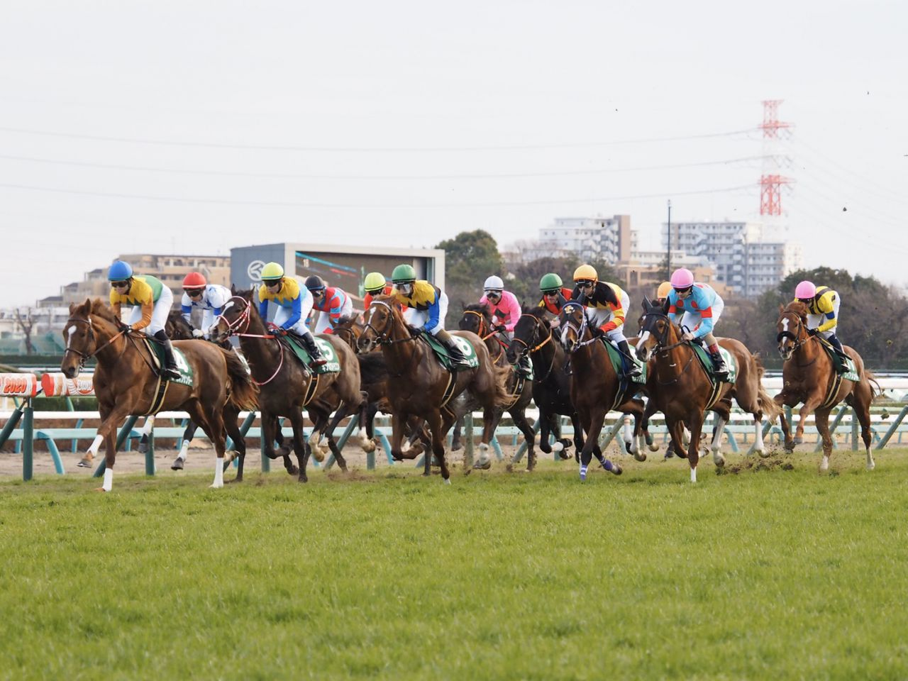 【クイーンS】吉田隼「枠なりのポジション」レッドアネモスが重賞初制覇!