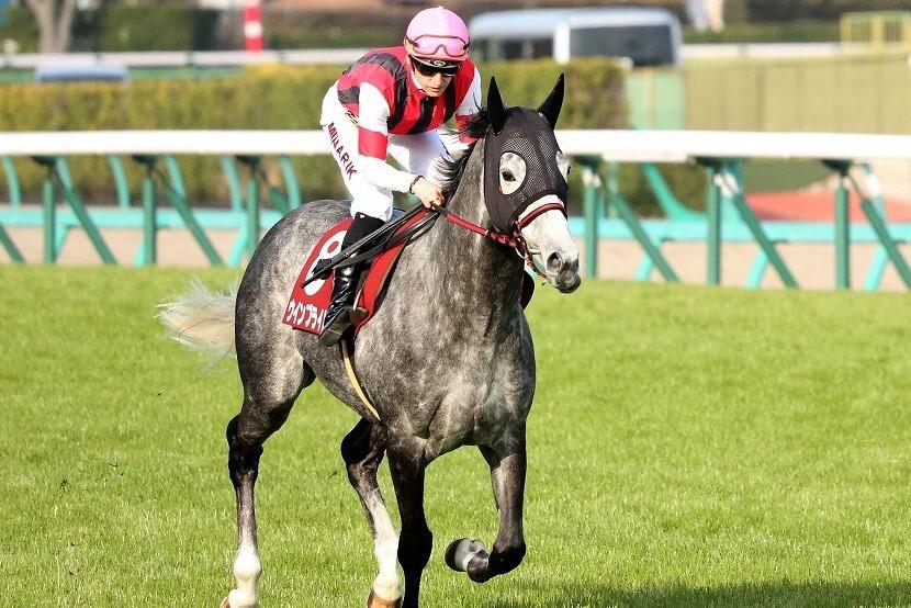 2020サウジカップ開催出走日本馬がドバイに到着