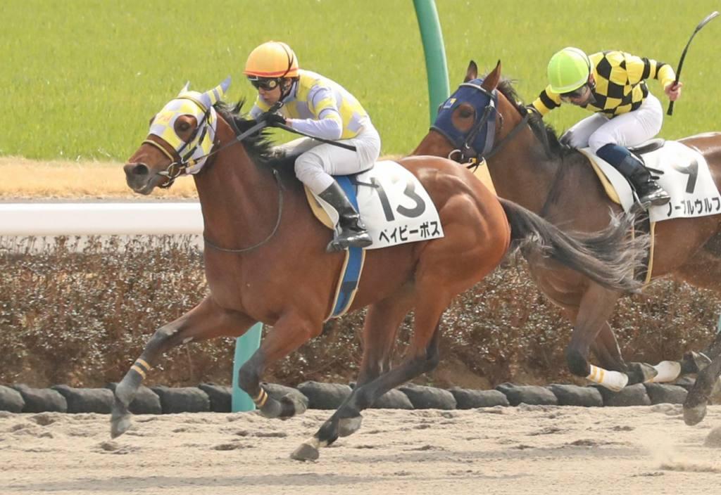 【新馬/中山4R】ベイビーボスが人気に応える!半兄にローズプリンスダム