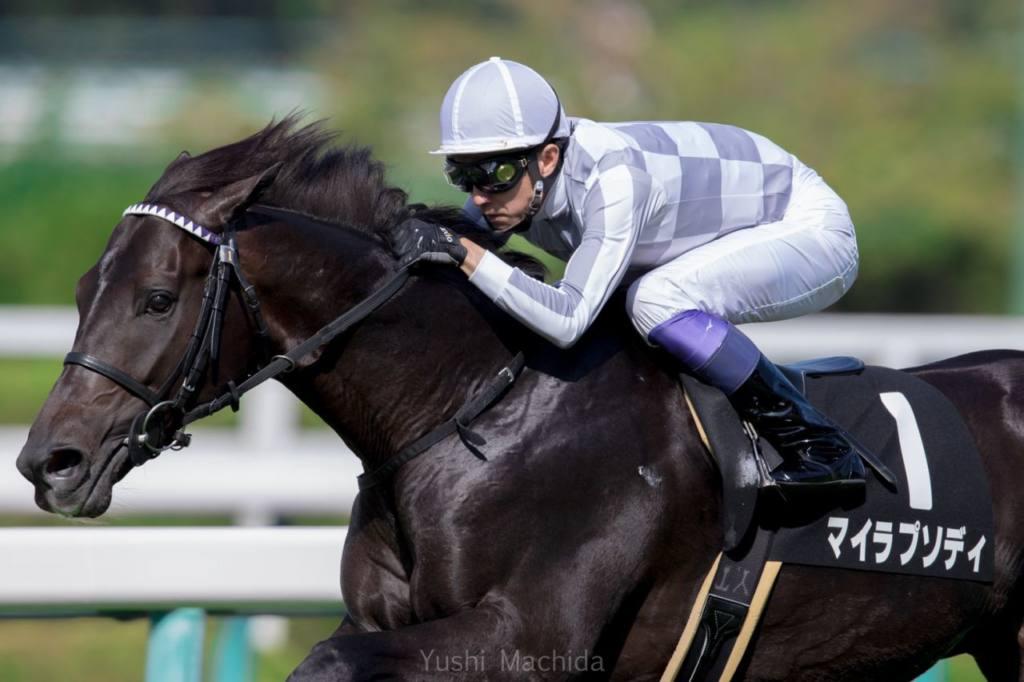 【スプリンターズS】出走馬の調教後の馬体重