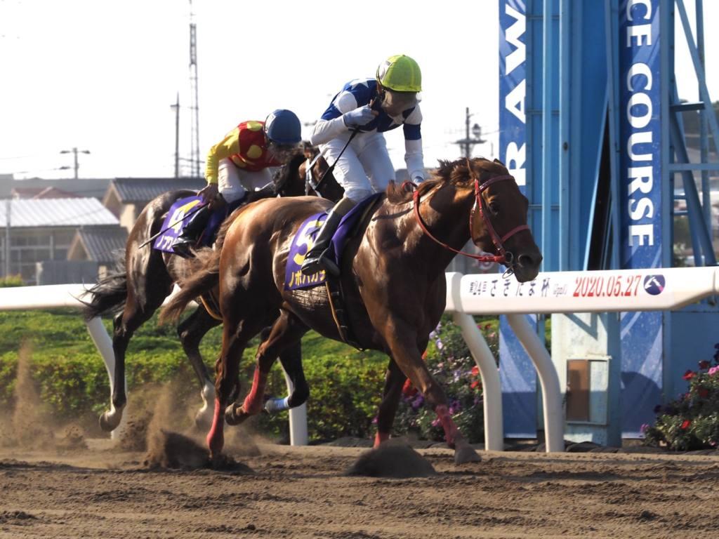 【北海道スプリントC】JRA出走予定馬