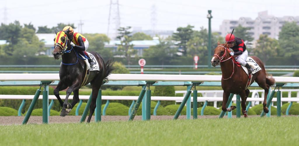 【新馬/阪神5R】キズナ産駒 フラーズダルムが4馬身差完勝!