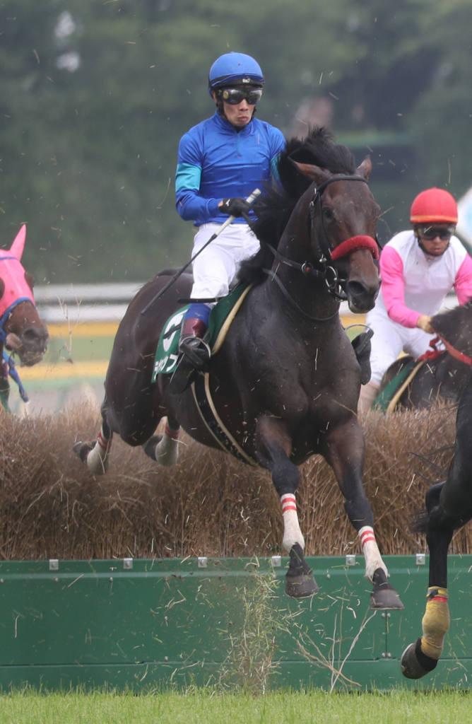 【阪神1R】トゥザワールド産駒 ゴールドチャリスが初勝利