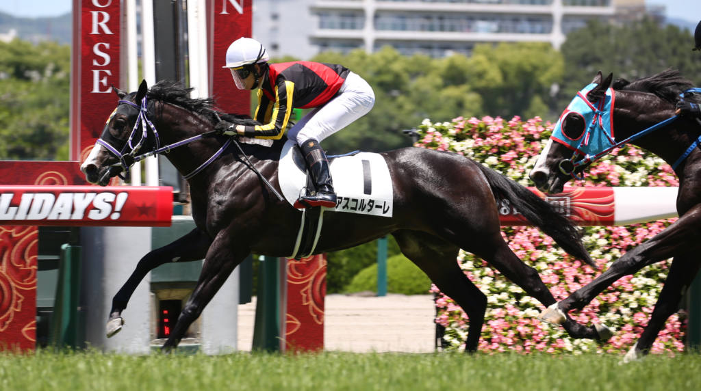 【新馬/阪神5R】アスコルターレがデビューV!ドゥラメンテ産駒JRA初勝利