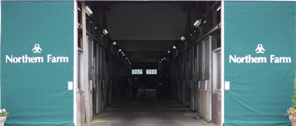 【セレクトセール2020】ディープ産駒13頭のうち9頭が億超え!コロナ禍でも衰え知らず