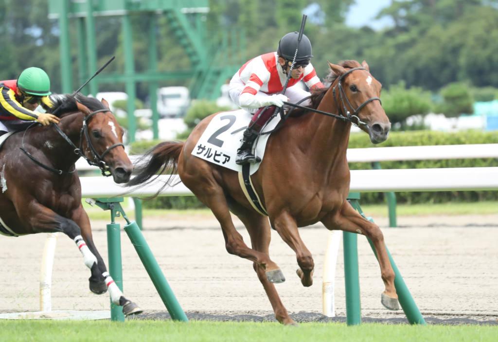 【新馬/新潟6R】ダイワメジャー産駒 サルビアがデビューV
