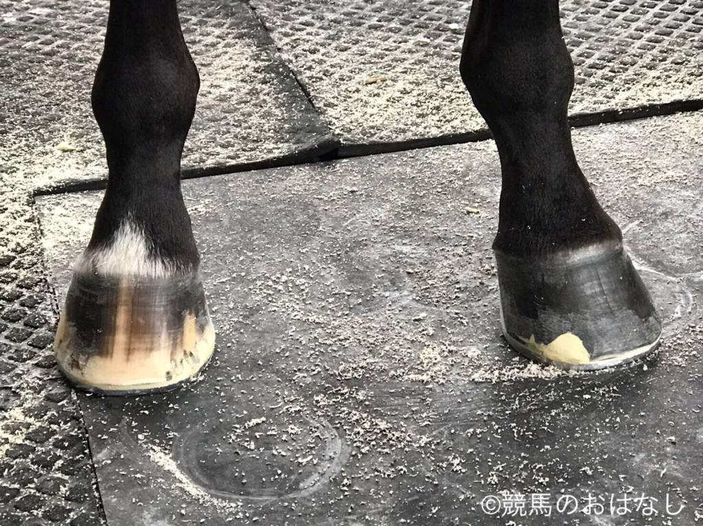 西内荘/装蹄の感触が良かった馬【9/27日曜版】