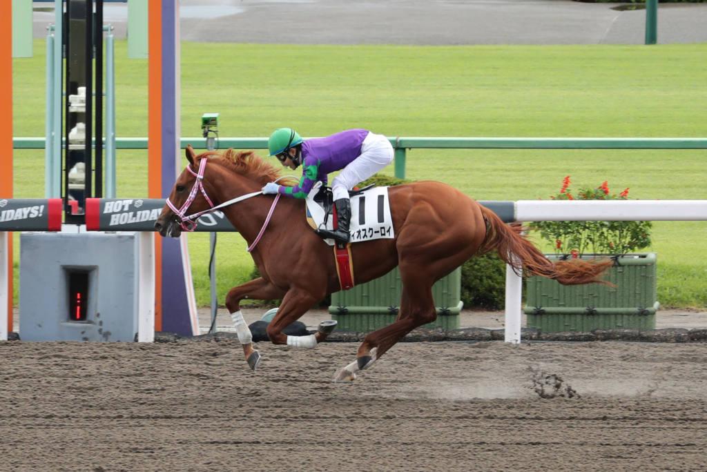 【新馬/京都4R】ディオスクーロイがデビューV!5馬身差完勝