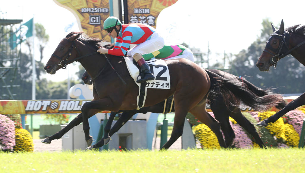 【新馬/京都4R】ディープ産駒 サナティオがデビューV!ダービー馬全妹は3着