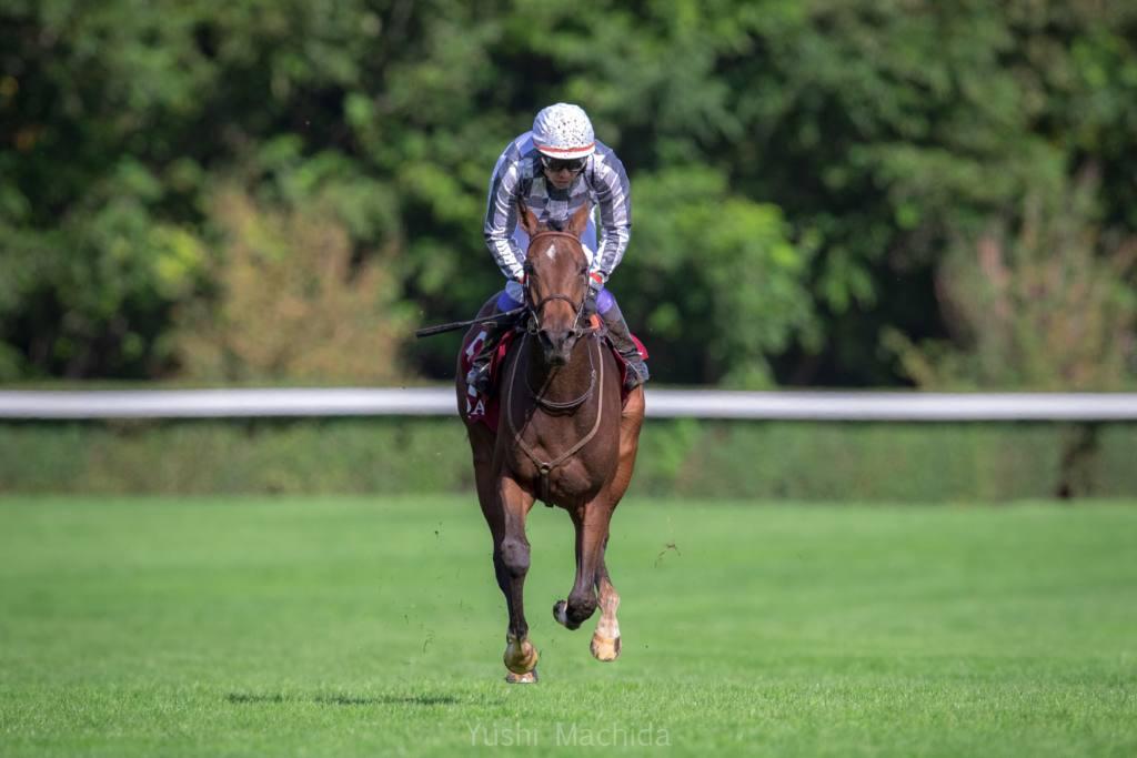 仏重賞勝ち馬 サヴァランが引退、繁殖入り