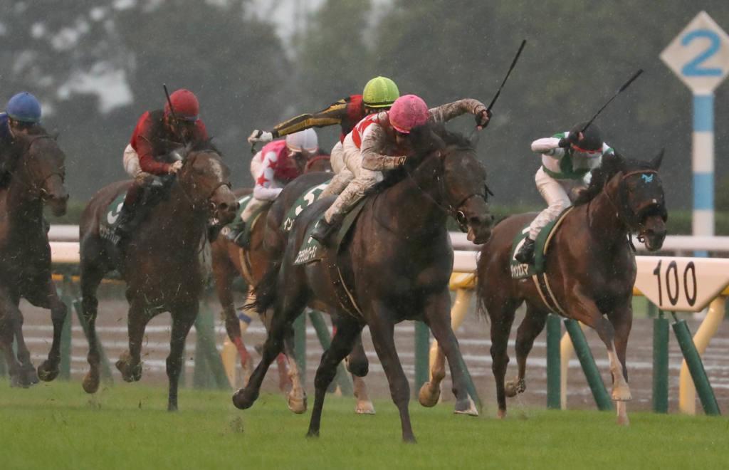 【共同通信杯登録馬】ステラヴェローチェなど13頭が登録