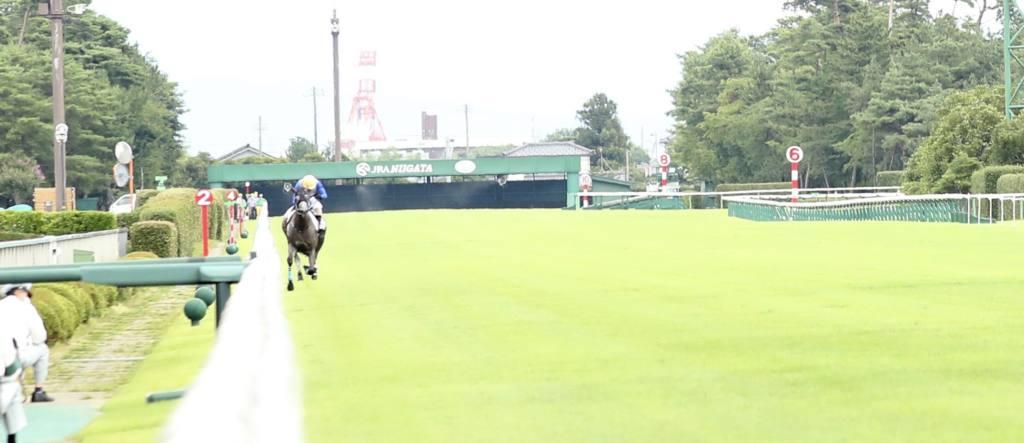 【東京5R】外ラチ逸走Vの破天荒ホース、リフレイムがまたしても規格外の走りを披露