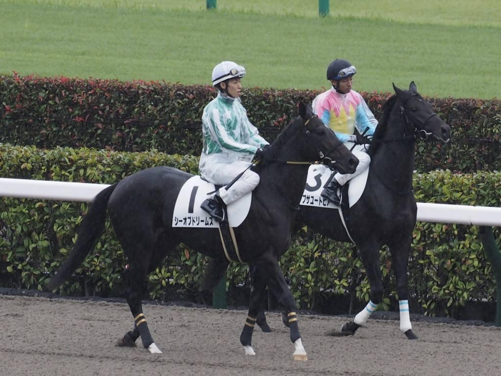 【新馬/東京4R】シーオブドリームスが5馬身差圧勝でデビュー勝ち