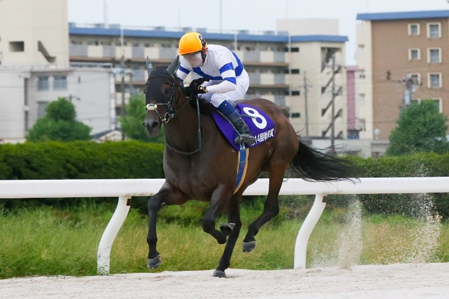 【エーデルワイス賞】JRAの出走予定馬