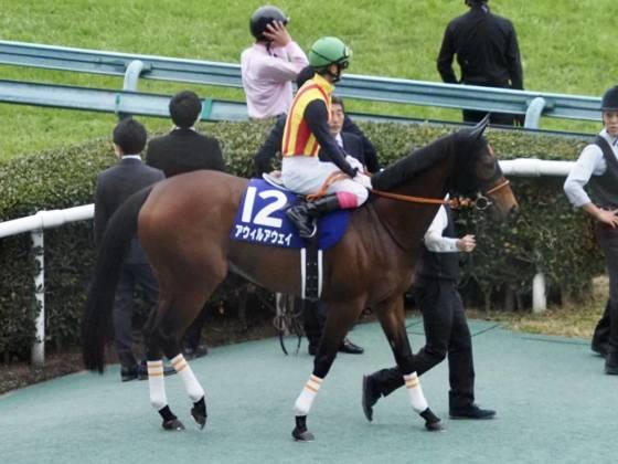 【PHOTO】マイルチャンピオンシップ