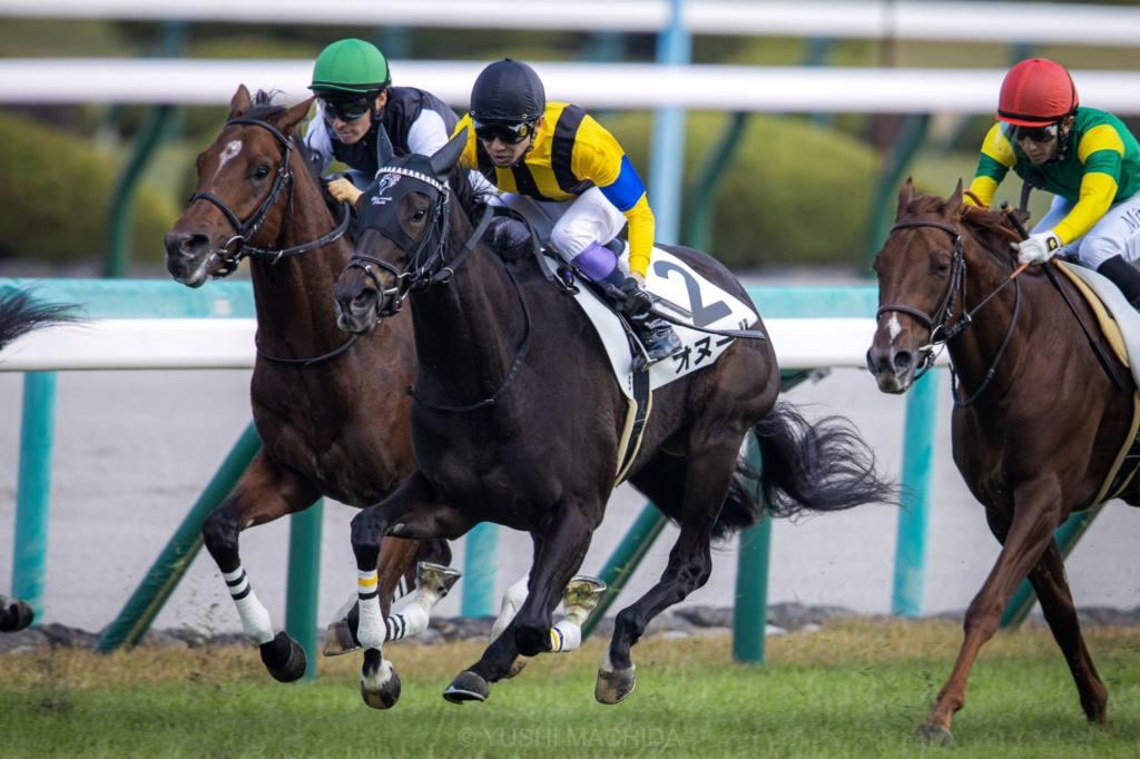 【新馬/阪神6R】ディープインパクト産駒 グレイイングリーンが人気に応える