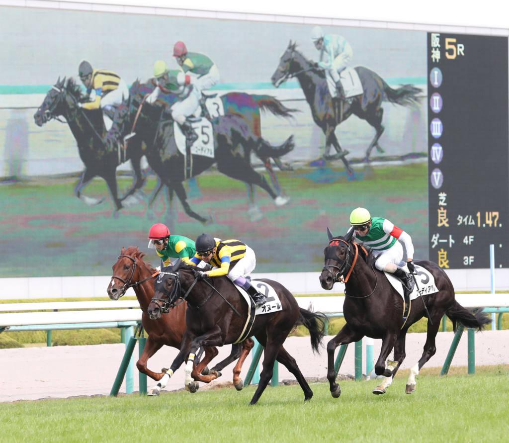 【福島牝馬S登録馬】ディアンドルなど19頭が登録