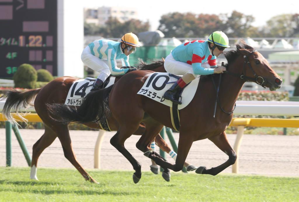 【ニュージーランドT登録馬】アヴェラーレなど22頭が登録