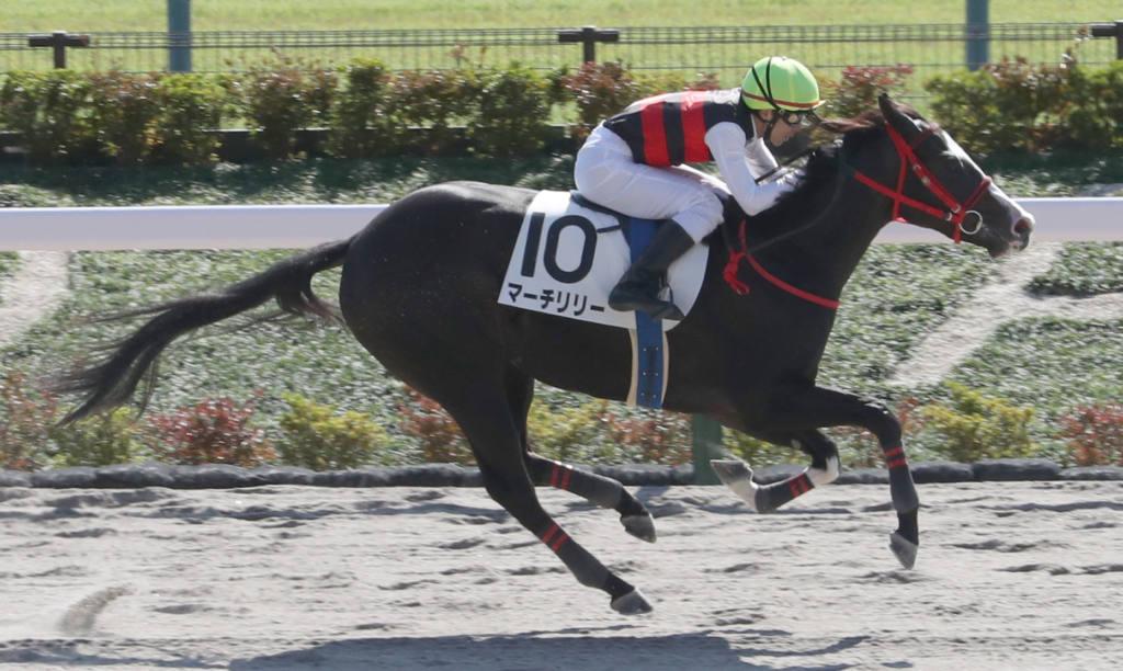 【新馬/東京4R】マジェスティックウォリアー産駒 マーチリリーがデビューV