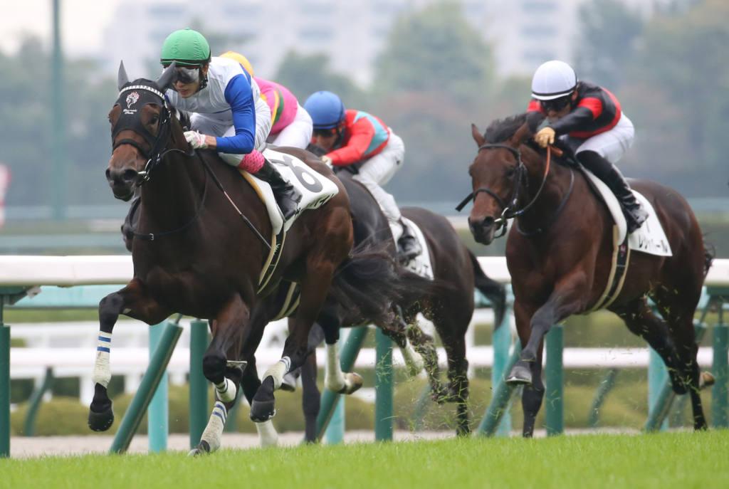 【新馬/阪神5R】ヴェルトハイムがデビューV!2馬身半差完勝
